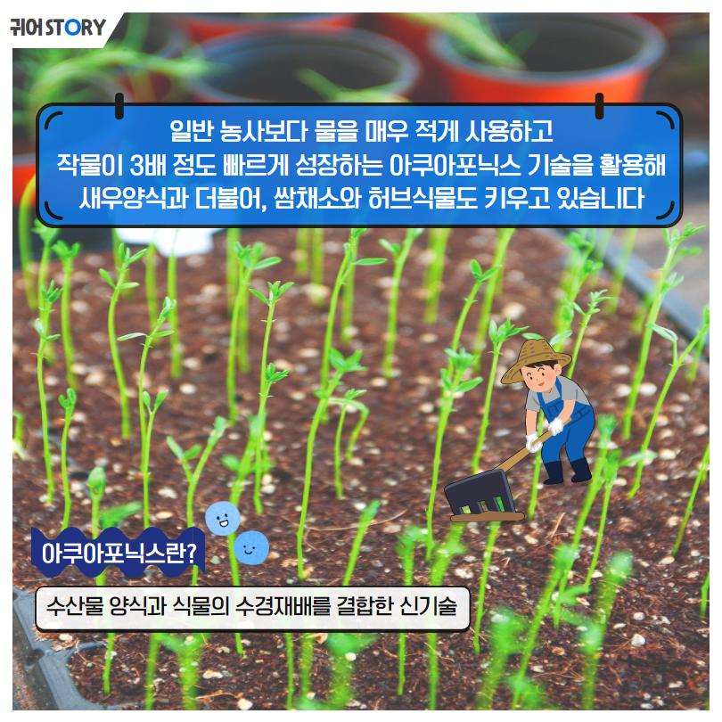 귀어STORY 일반 농사보다 물을 매우 적게 사용하고 작물이 3배 정도 빠르게 성장하는 아쿠아포닉스 기술을 활용해 새우양식과 더불어, 쌈채소와 허브식물도 키우고 있습니다 아쿠아포닉스란? 수산물 양식과 식물의 수경재배를 결합한 신기술